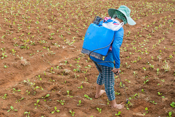 farmer spraying toxic pesticides or insecticides in vegetable farm