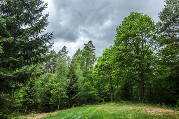 Summer forest trail landscape in Czech republic.