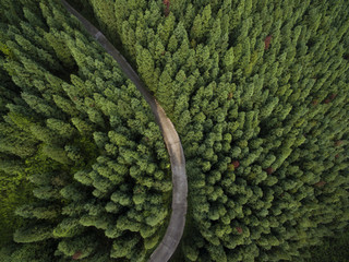 Aerial view of small road in the pine forest