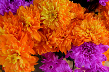 Orange flower stock images. Orange and purple chrysanthemum. Beautiful flower photo. Mixture of flowers. Summer bouquet images