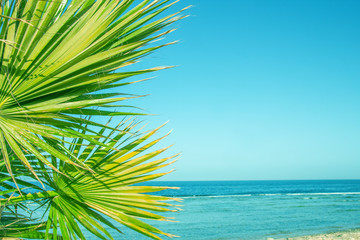 Beautiful palm tree on the sea shore background