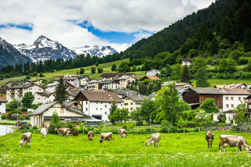 Cow pasture and Alps in background of Mustair village,Switzerland