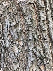 The  tree skin texture