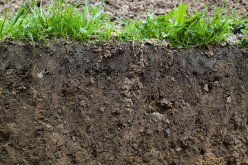 close up view of slice of soil with roots and grass from above