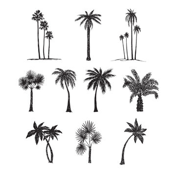 Palm trees silhouette collection, hand drawn doodle sketch, black and white vector illustration