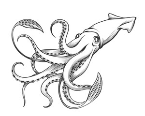 Giant Squid Engraving Illustration