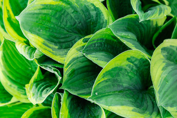 Green plant on a sunny day, bright colors, green texture and background.
