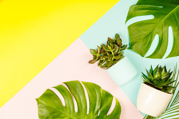 Succulents and monstera leaves on pastel colors background