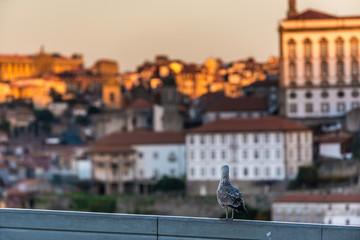 Mew in Vila Nova de Gaia city, Portugal. Porto city buildings on background