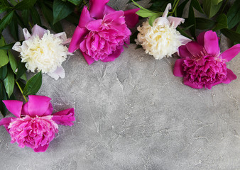 beautiful pink and white peony flowers