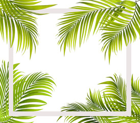 Green leaf of palm tree background