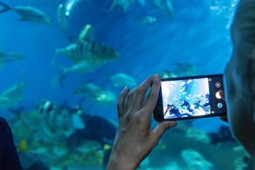 Girl takes a video on the smartphone as divers feed the fish in the aquarium. Selective focus. Rear view.