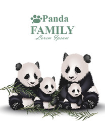 Panda family Vector. Cute animals detailed illustrations