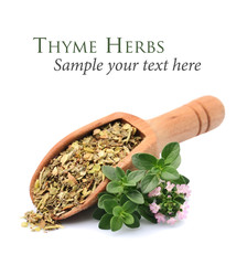 Herbs of thyme.