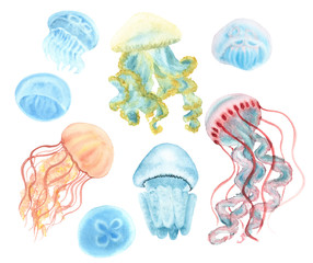 Jellyfish set