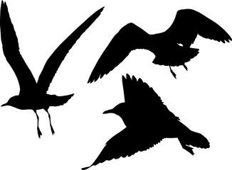 set of three black seagulls illustration