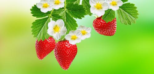 fresh garden summer strawberries