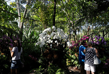 Visitors take photos of orchids at Singapore Botanic Gardens' National Orchid Garden