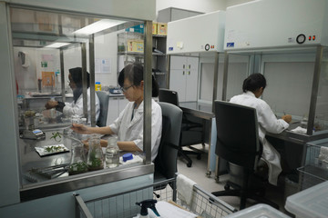 Lab technicians work in the Orchid Breeding and Micropropagation Laboratory at Singapore Botanic Gardens