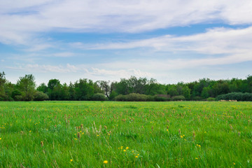 Spring meadow near the forest