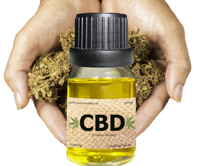 CBD cannabis oil bottle with hands holding cannabis buds in background