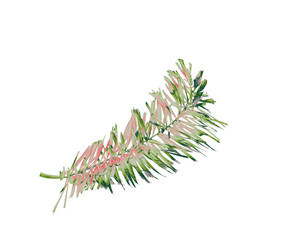 green foxtail palm leaf tree isolated on white background with clipping path