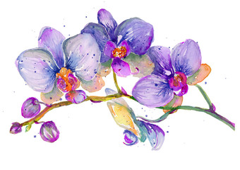 Watercolor orchid branch on a white background.