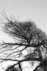 dry tree branches in black and white photograph