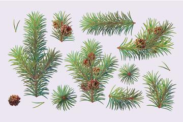 vector christmas evergreen pine tree branch set