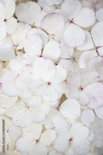 white flower background close up romantic and love pattern