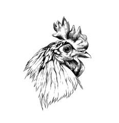 cock head in profile, sketch vector graphics monochrome illustration