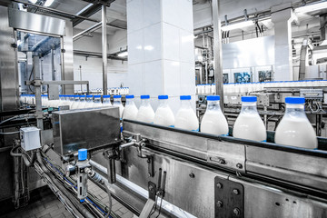 Milk production at factory