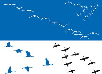 Oiseaux - Vols de migrateurs