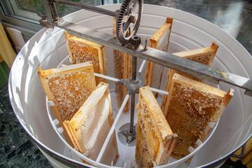 Apiculture - Extraction du miel