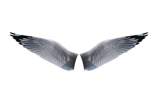 wings bird isolated on white background - clipping paths