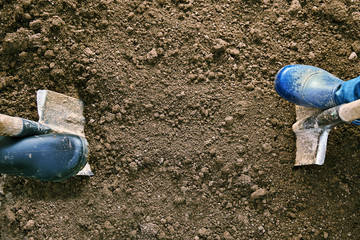 Concept of the agricultural work. Male and female feet in rubber shoes digging ground with shovels in the earth.