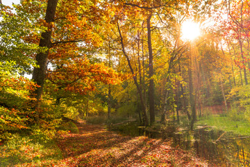 Forest in autumn, landscape with sunset. Sun shining through trees.