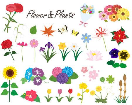 季節の花と植物のイラスト素材