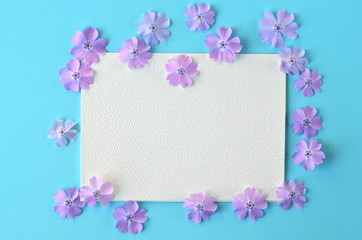 Lavender violet phlox flowers on turquoise teal blue pastel flat layout with copy space