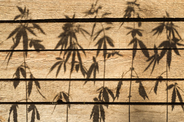 Shadow from hemp plants on a wooden surface