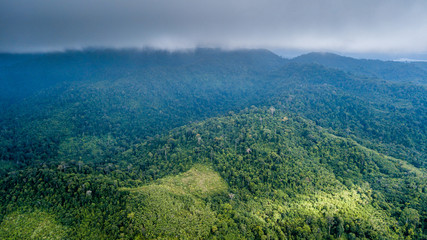 Aerial view of palm oil and date plantations hacked out of a tropical rain forest