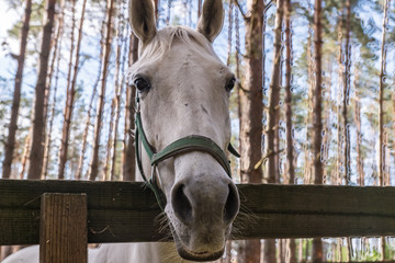 Horse's head with bridle; close-up outdoor shot.