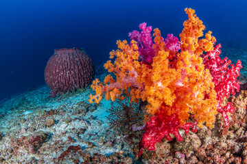 Poster Coral reefs Beautiful, brightly colored soft corals on a tropical coral reef