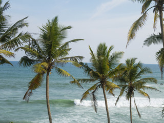 Exotic palm trees with ocean behind