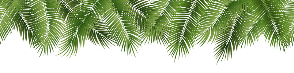 Vector seamless summer palm leaves on white background. Wall mural