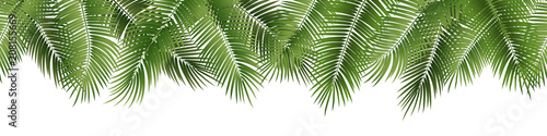 Wall mural Vector seamless summer palm leaves on white background.