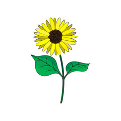 Sunflower with green leaves in flat style