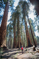 Photo sur Plexiglas Parc Naturel trail in sequoia national park in late May, 2018