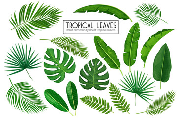 set tropical leaves Fotoväggar