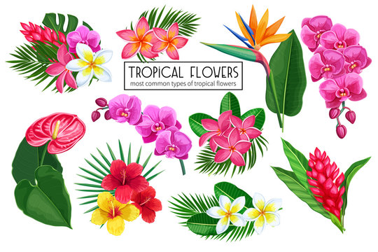 Vector set tropical flowers